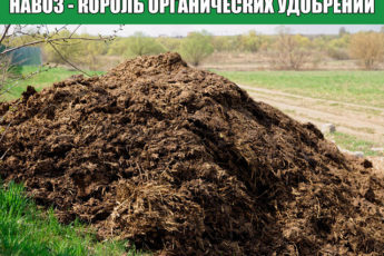 Навоз - король органических удобрений.