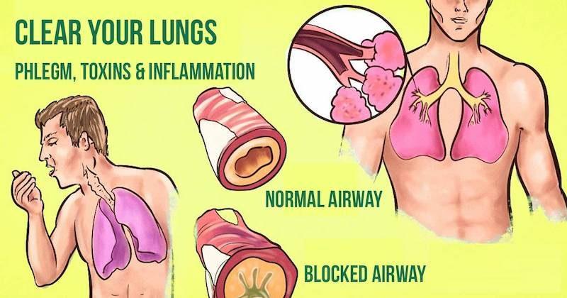 lungsfinal